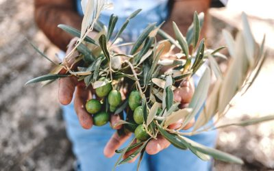 Was gutes Olivenöl ausmacht